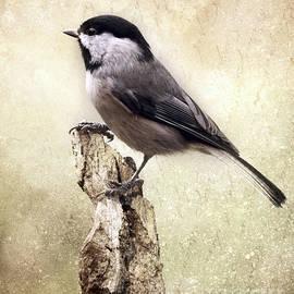 Karen Beasley - Chickadee Portrait