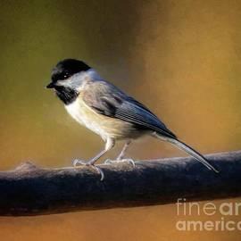 Chickadee by Warrena J Barnerd