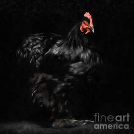 Chicken Painting - Edward Fielding