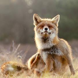 Roeselien Raimond - Chill Fox