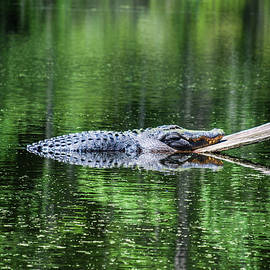 Chillin by Danny Shaffer Photography