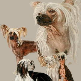 Barbara Keith - Chinese Crested
