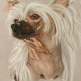 Barbara Keith - Chinese Crested Portrait