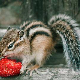 Chipmunk and Strawberry