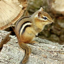 Lyuba Filatova - Chipmunk
