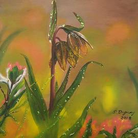 Sharon Duguay - Chocolate Lily after the Rain