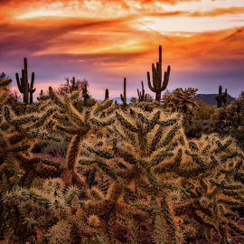 Saija Lehtonen - Cholla Glow Sunset