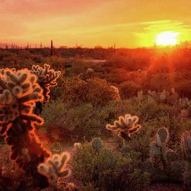 Saija Lehtonen - Cholla Sunset in the Sonoran