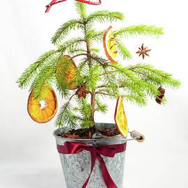 Helen Northcott - Christmas Tree