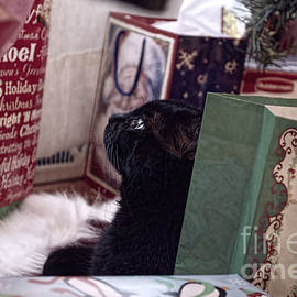 Luther Fine Art - Christmas Under the Tree -Holiday