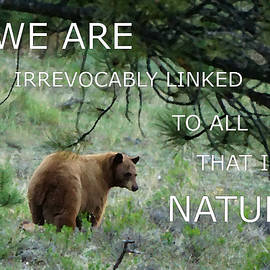 Cinnamon Bear Nature Quote by Tranquil Light Photography