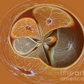 Citrus Orb by Elisabeth Lucas