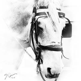 Evie Carrier - City Horse High Key