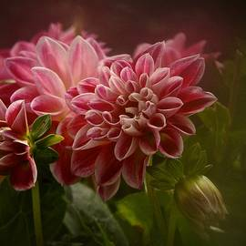 Richard Cummings - Classic Dahlia 2016