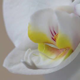 Victor Vega - Close up of and orchid
