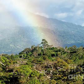 Genevieve Vallee - Cloudforest Rainbow