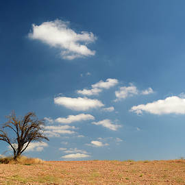 Guido Montanes Castillo - Clouds and tree
