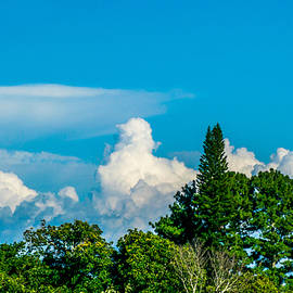 Clouds and Trees by Totto Ponce