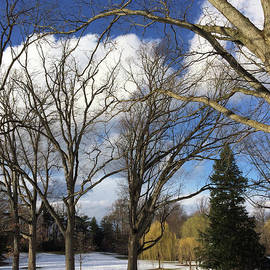 Clay Cofer - Clouds for Leaves Snow for Grass