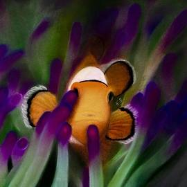 Eric Rosales - Clownfish Peaking Out