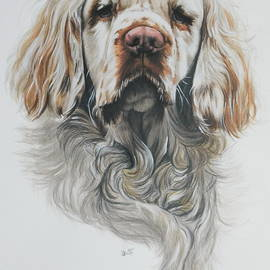 Clumber Spaniel in Watercolor by Barbara Keith