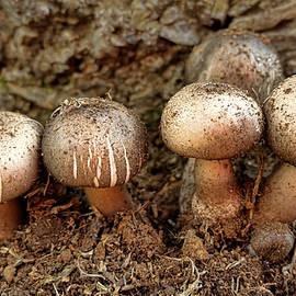 Cluster Of Mushrooms by Pamela Walton
