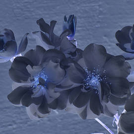 Linda Brody - Cluster of White Roses with Blue Cast