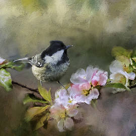 Coal Tit and Apple Blossom by Robert Murray