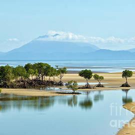 Genevieve Vallee - Coastal mangrove
