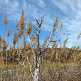 Coastal New England Marsh Landscape by Mother Nature
