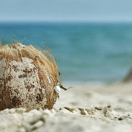 Coconut Beach by Lee Webb