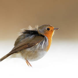 Roeselien Raimond - Cold Feet II - Little Red Robin in the Snow