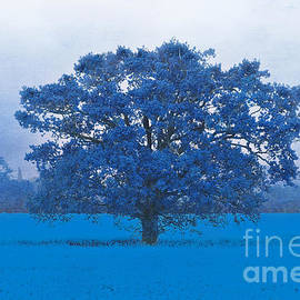 Terri Waters - Cold Tree In A Field Of Blue