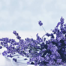 Stephanie Frey - Collection of Lavender