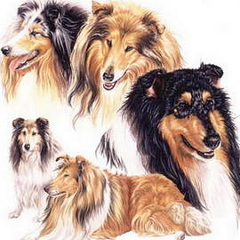 Collie Collage by Barbara Keith