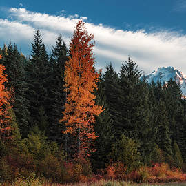 Color At Mt. Hood by Hans Franchesco