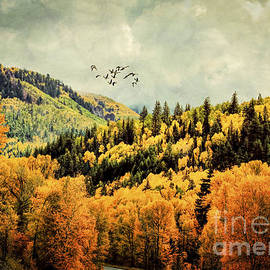 Janice Rae Pariza - Colorado Autumn and Migration
