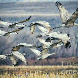 Janice Rae Pariza - Colorado Crane Take Off