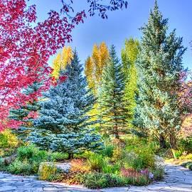 Colorado Forest In Technicolor by Autumn Scenes