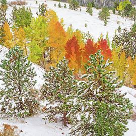 Bijan Pirnia - Colorado Is Stunningly Beautiful. Here