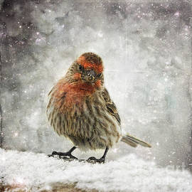 Colorado Red Finch In Snowstorm by Janice Pariza