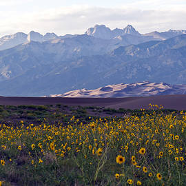 Colorado Style Landscape Sunflowers on the Sangre de Cristos by Scotts Scapes