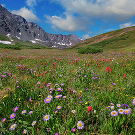 Rob Greebon - Colorado Wildflowers in Stevens Gulch 1