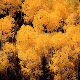 The Forests Edge Photography - Diane Sandoval - Colorado