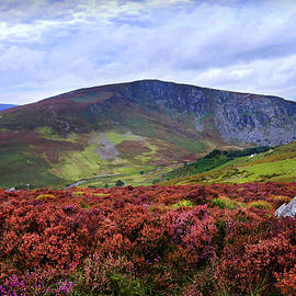 Jenny Rainbow - Colorful Carpet of Wicklow Hills