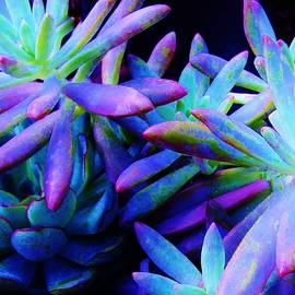 Sharon Ackley - Colorful Dancing Succulents