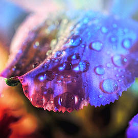 Lilia D - Colorful drops Macro