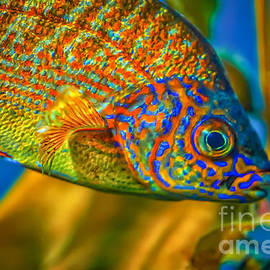 Colorful Fish by Mitch Shindelbower