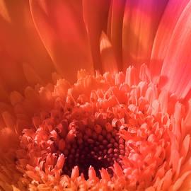 Johanna Hurmerinta - Colorful Flower Joy