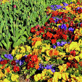 Colorful Garden 3 by Kaye Menner